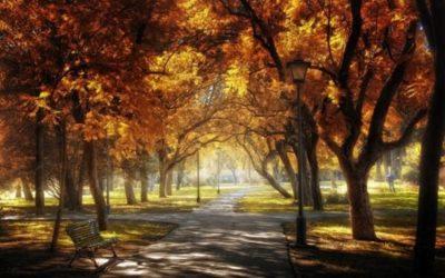 осень - сколько дней до осени осталось