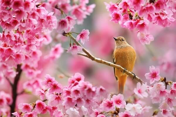 весна - сколько дней до весны осталось