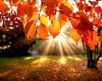 приметы про осень