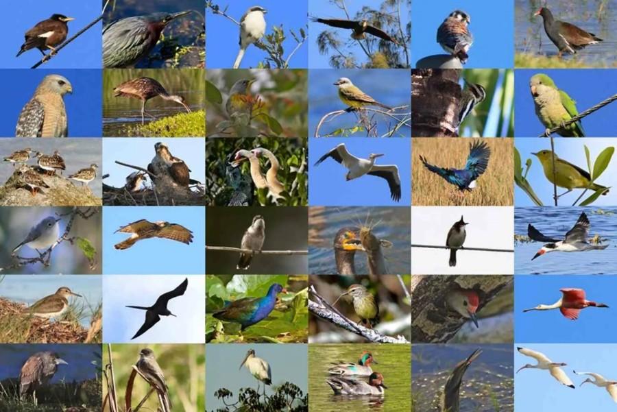 день птиц 1 апреля